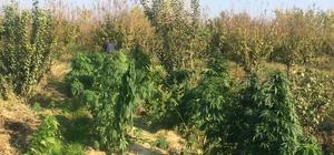 Uyuşturucu ekili tarlanın sahibi FETÖ firarisi çıktı