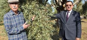 Milas'ta halkalı lekeyle mücadelede yüzde 80 verim