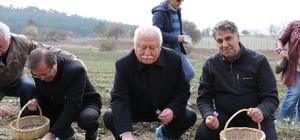 Rektör Polat, Safran hasadı yaptı