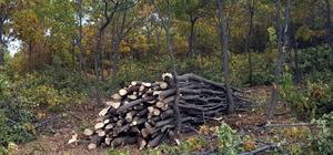 Bozkırın da gelir getirici ormanları oldu