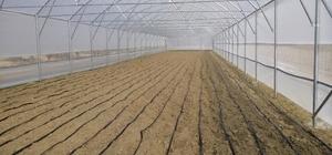 Kırkağaç ve Soma'daki üreticiler kışın da kazanacak
