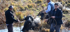 Mahsur kalan hayvanları kurtarma çalışmaları sürüyor