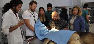 Gözleri görmeyen geyik yavrusuna katarakt ameliyatı