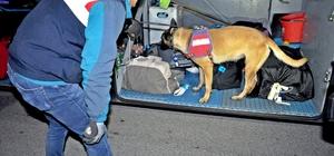 Jandarmadan narkotik ve bomba arama köpekli asayiş uygulaması