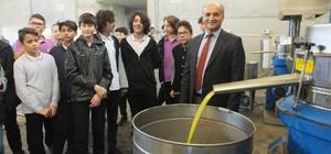 Öğrenciler zeytinin yağa dönüşme aşamasını öğrendi