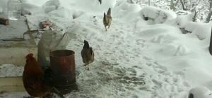 laşehir'de kar kalınlığı 7 santimetreye ulaştı