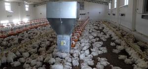 DÜ'den organik tavuk yatırımcılarına bilimsel eğitim