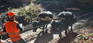 Orman köylülerine destekler sürüyor