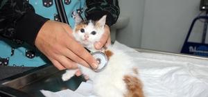 Sokakta bulunan yavru kedinin kalbi sağda çıktı