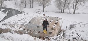 Bitlis ve Muş'ta kar yağışı