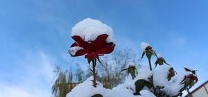 Oltu'ya yılın ilk karı düştü