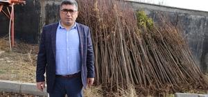 Varto Belediyesinden ağaçlandırma çalışması