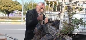 Şanlıurfa'da fıstık fidanları ekilmeye başlandı