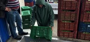 Mut'ta zeytinyağı fabrikalarında yoğunluk yaşanıyor