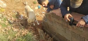 Demir bariyerlere sıkışan köpek kurtarıldı
