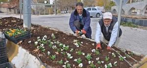 Gölbaşı Belediyesi kışlık çiçek dikim yapıyor