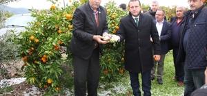 Başkan Soylu mandalina üreticisinin yanında