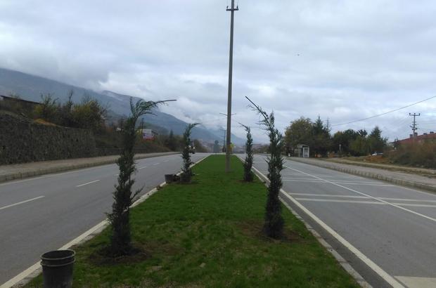 Simav'da kaldırım ve refüjler ağaçlandırılıyor