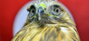Ağrı'da bitkin ve yaralı bulunan kuşlar koruma altına alındı