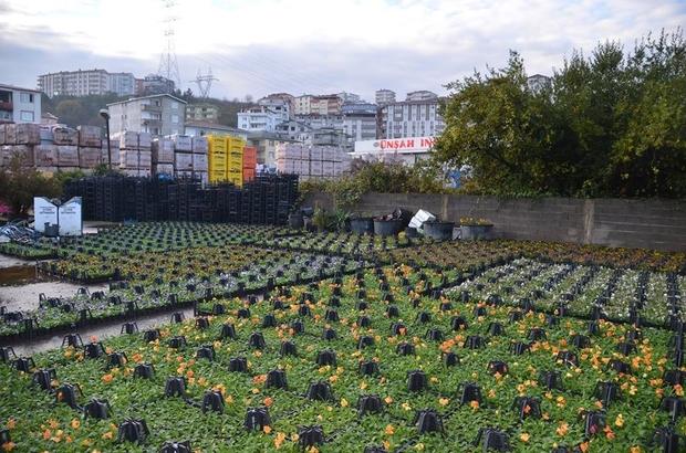 Alaplı'da park ve bahçelerin bakımı sürüyor