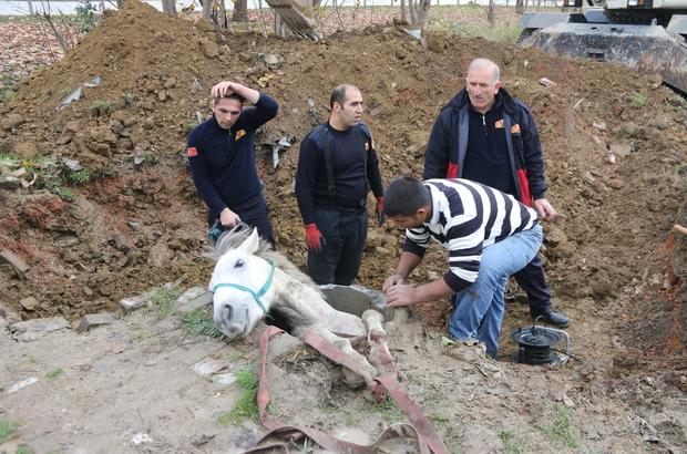 Rögar çukuruna düşen atı itfaiye ekipleri kurtardı
