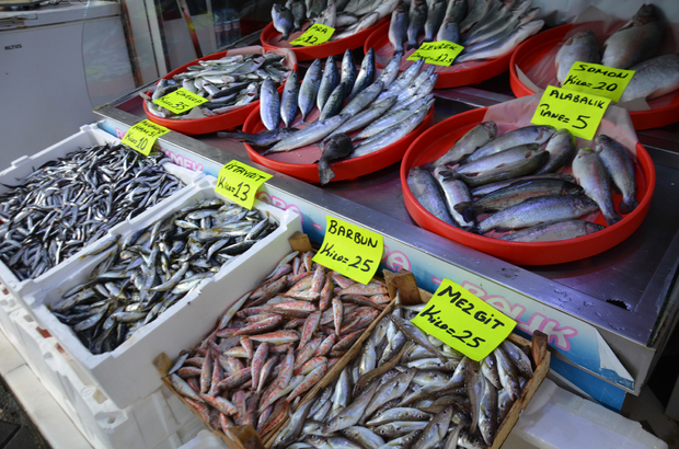 Balıkçılar palamut ve hamside umduğunu bulamadı