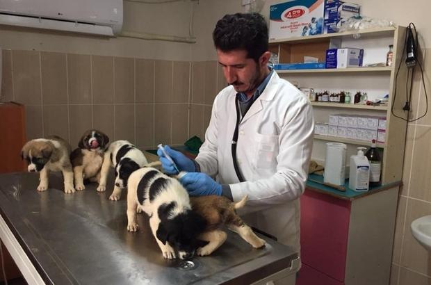 Adıyaman Belediyesi sokak hayvanları için çalışma başlattı