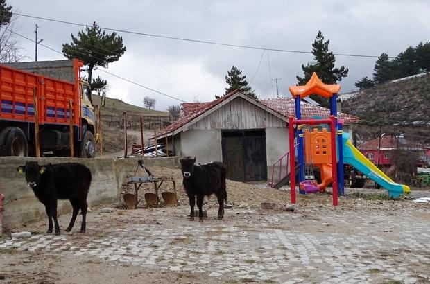 Çocuk oyun parkı hayvanların gezinti alanı oldu