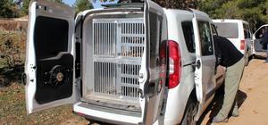 Uşak'taki kayıp kişi kadavra köpekleriyle arandı