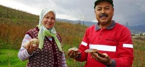Aydın'da yağışlardan sonra çıkan mantarlar vatandaşın yüzünü güldürdü