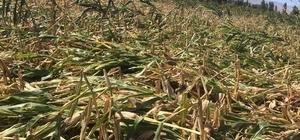 Çiftçilerin borçları ertelendi
