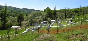 Üç ilde 18 bal ormanı tesis edildi