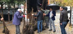 Hani'de 50 çiftçiye 5 bin adet ceviz fidanı dağıtıldı