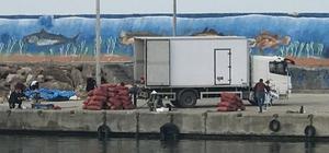Akçakoca'da deniz salyangozu sevkiyatı sürüyor