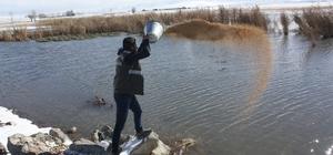 Van'da yaban hayvanları için sulak alanlara yem bırakıldı