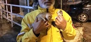 Aydın'da ağaçta mahsur kalan kediler kurtarıldı