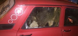 Çaldığı 4 büyükbaş hayvanı otomobile sığdırdı