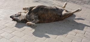 Eskişehir'de yazdan kalma bir gün