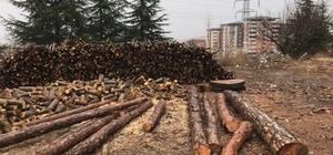 Jandarmadan kaçak odun operasyonu