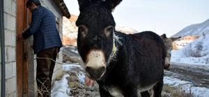 Bitlis'te donmak üzere olan iki eşek kurtarıldı