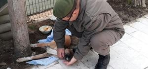 Yaralı köpeğe Jandarma şevkati
