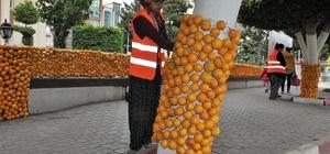Festival süslemeleri için 30 ton narenciye kullanıldı