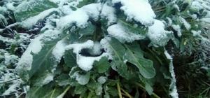 Sakarya'nın yüksek kesimlerinde kar yağışı başladı