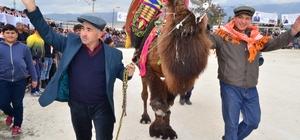 Demre deve güreşlerine hazırlanıyor
