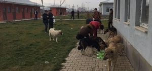 Muş Belediyesinden sokak hayvanları açıklaması