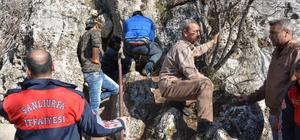 Kirpiyi yakalamaya çalışan köpek kayalıkta sıkıştı
