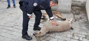 Dağ keçisi avcılarına 28 bin 727 lira ceza