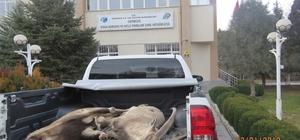 Erzincan da yaban keçisini vuran 4 avcıya 29 bin 636 TL para cezası kesildi