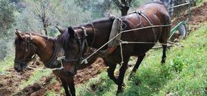 Desteklemeler cazip hale geldi, Aydın'da çiftçi sayısı arttı