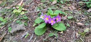 Kışın ortasında çiçek açan bitkiler şaşırttı